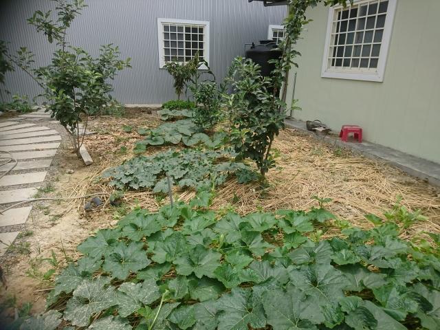 雞糞製成有機肥料